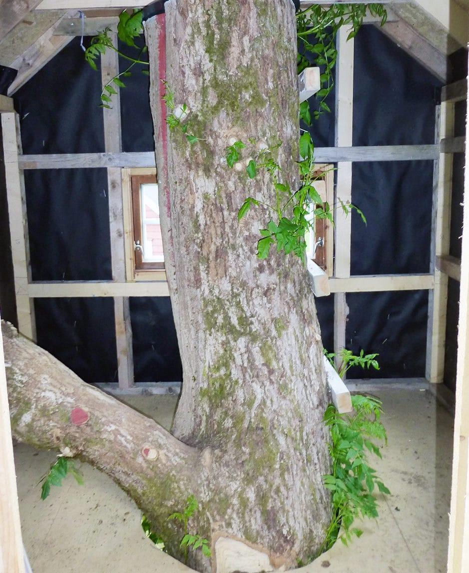 Hytte bygget rundt et tre