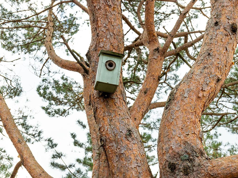 Bilde av fuglekasse i tretoppen ved trehytta - Vinnerinnlegg Barnas Trepris 2020