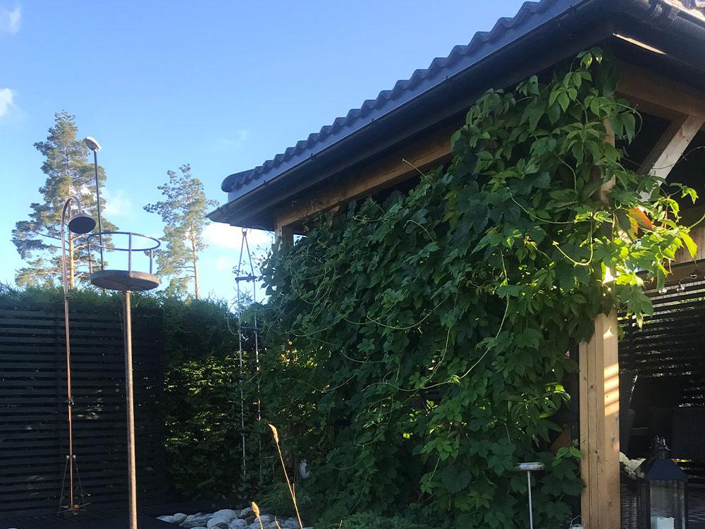 Bilde av pergola med klatreplanter hos finalist nummer 12. Uteromsprisen 2021.